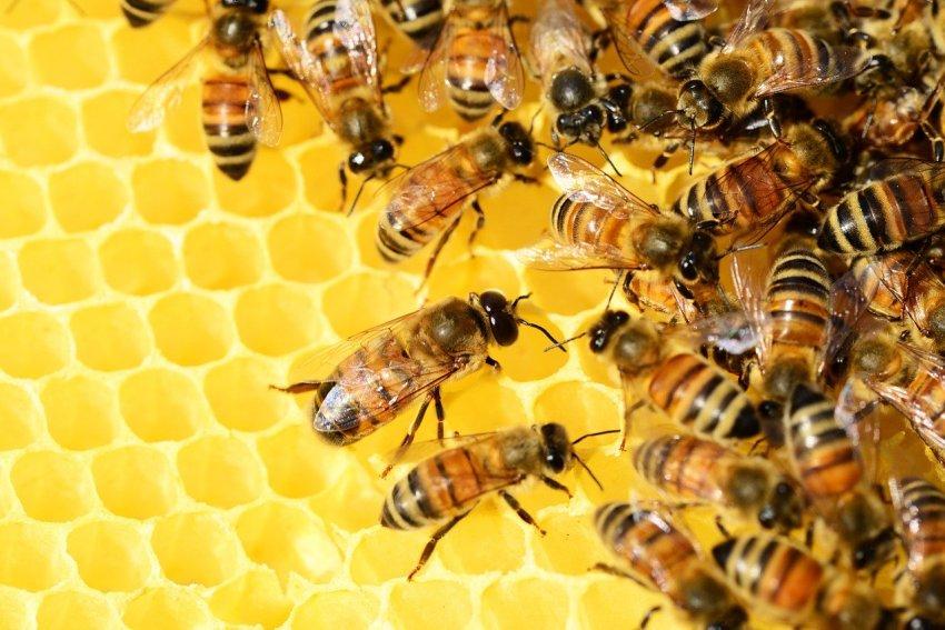 čebelarstvo