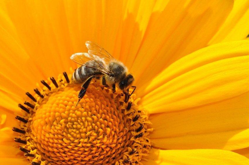 poklic čebelarstvo